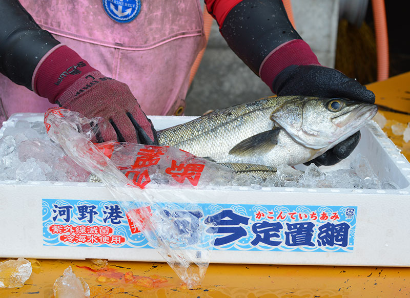 朝獲れた新鮮なお魚写真