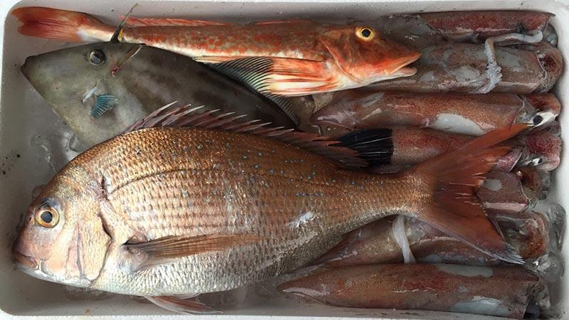 夏に取れるお魚
